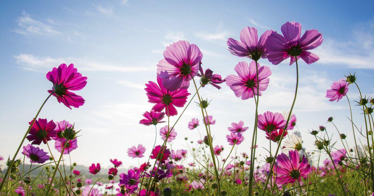 Como Hacer Un Cuarto Frio Para Flores Estas Pensando En Hacer Un Cuarto Frio Para Flores En Tu Propiedad Existe Una Gran Variedad Flores Frio Pensando En Ti