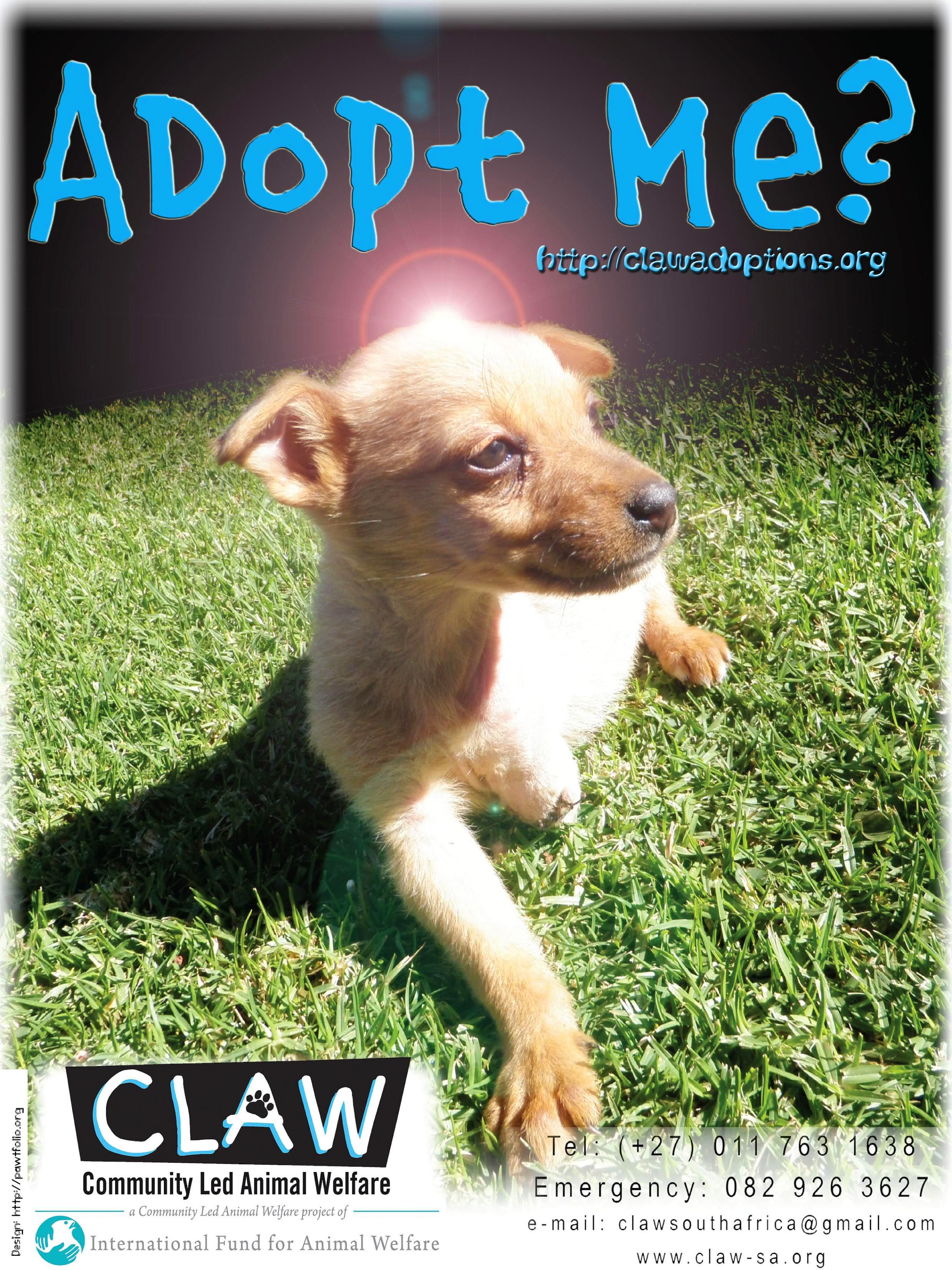 Adopt Me? (With images) Dog rocks, Dogs, Adoption