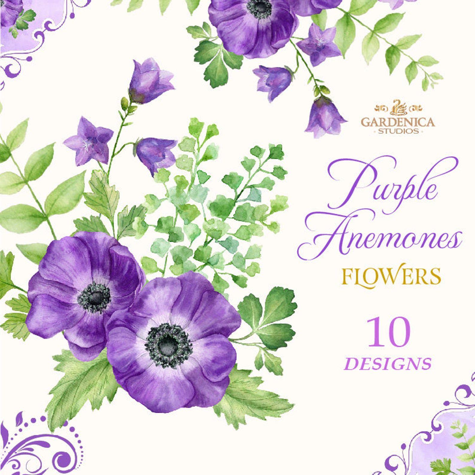 Watercolor Purple Flowers Anemone Clipart Purple Flower Etsy In 2020 Digital Flowers Flower Clipart Purple Flowers