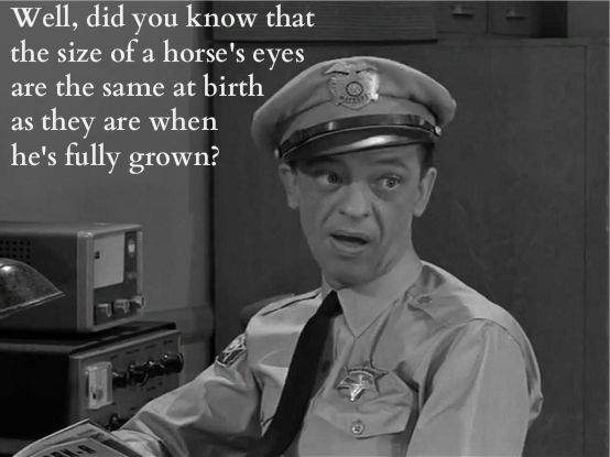 Odd Facts Known By Few With Images Andy Griffith Quotes Andy