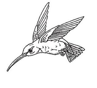 Simple Hummingbird Drawing Iruzww Dibujos De Pajaro Colibri