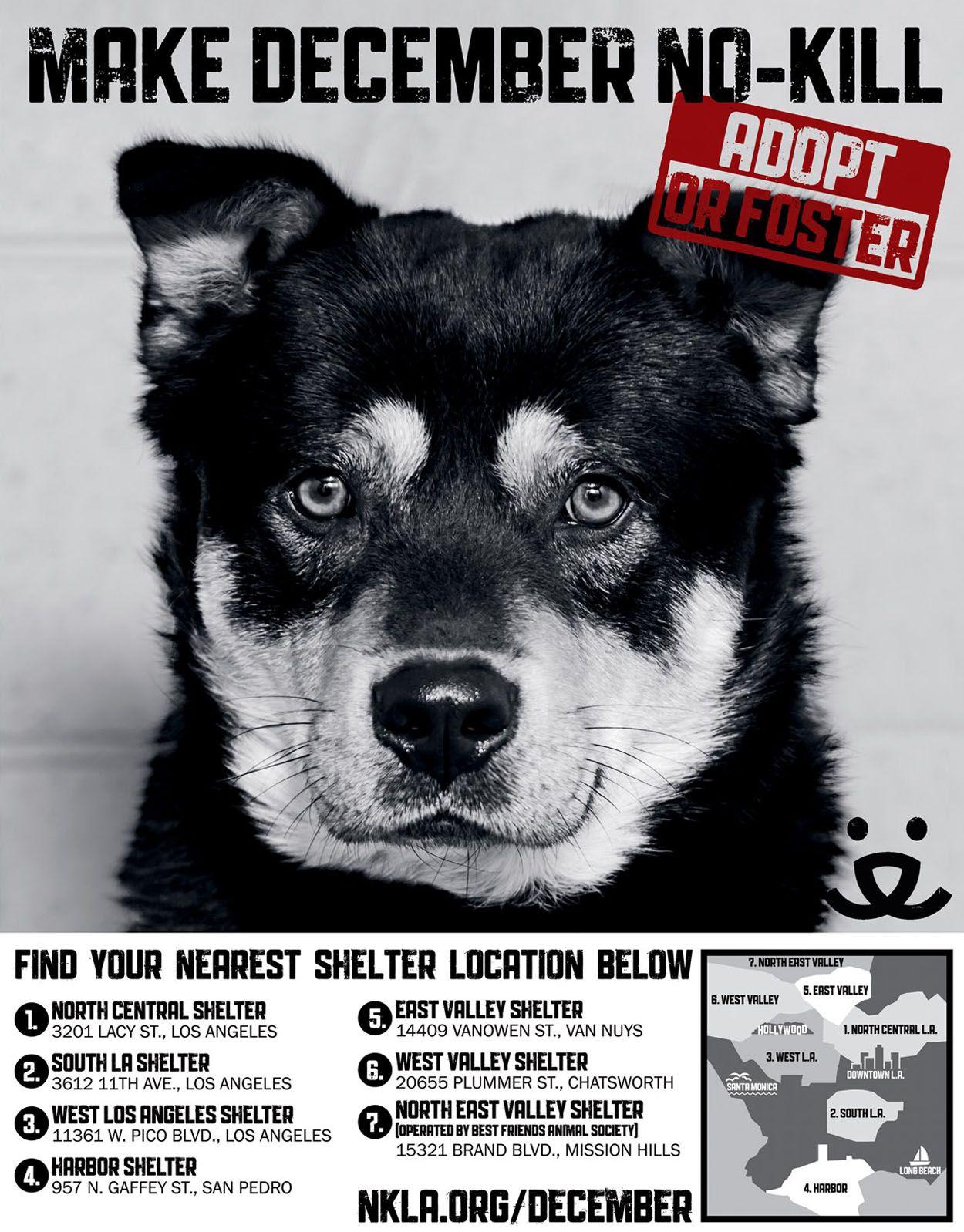 13+ Van nuys animal shelter ideas