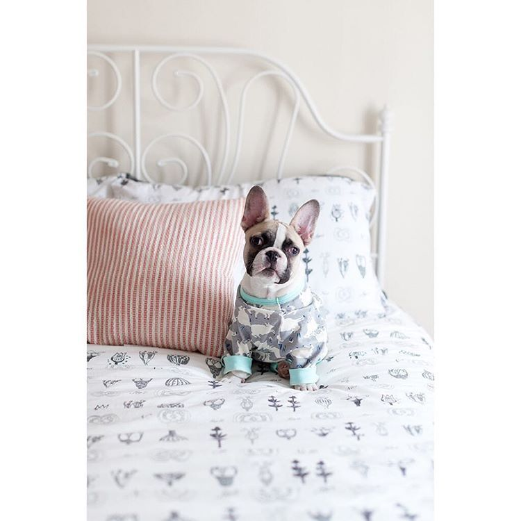 French Bulldog Puppy In Pjs And Bedding From The Frenchie Store
