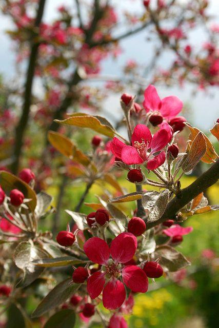 plant habit, fruiting | Plants, Fruit, Sidewalk