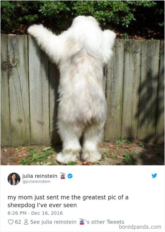 Funniest Dog Tweets That Will Make You Go ROFL ! (15+ Tweets) Dogs