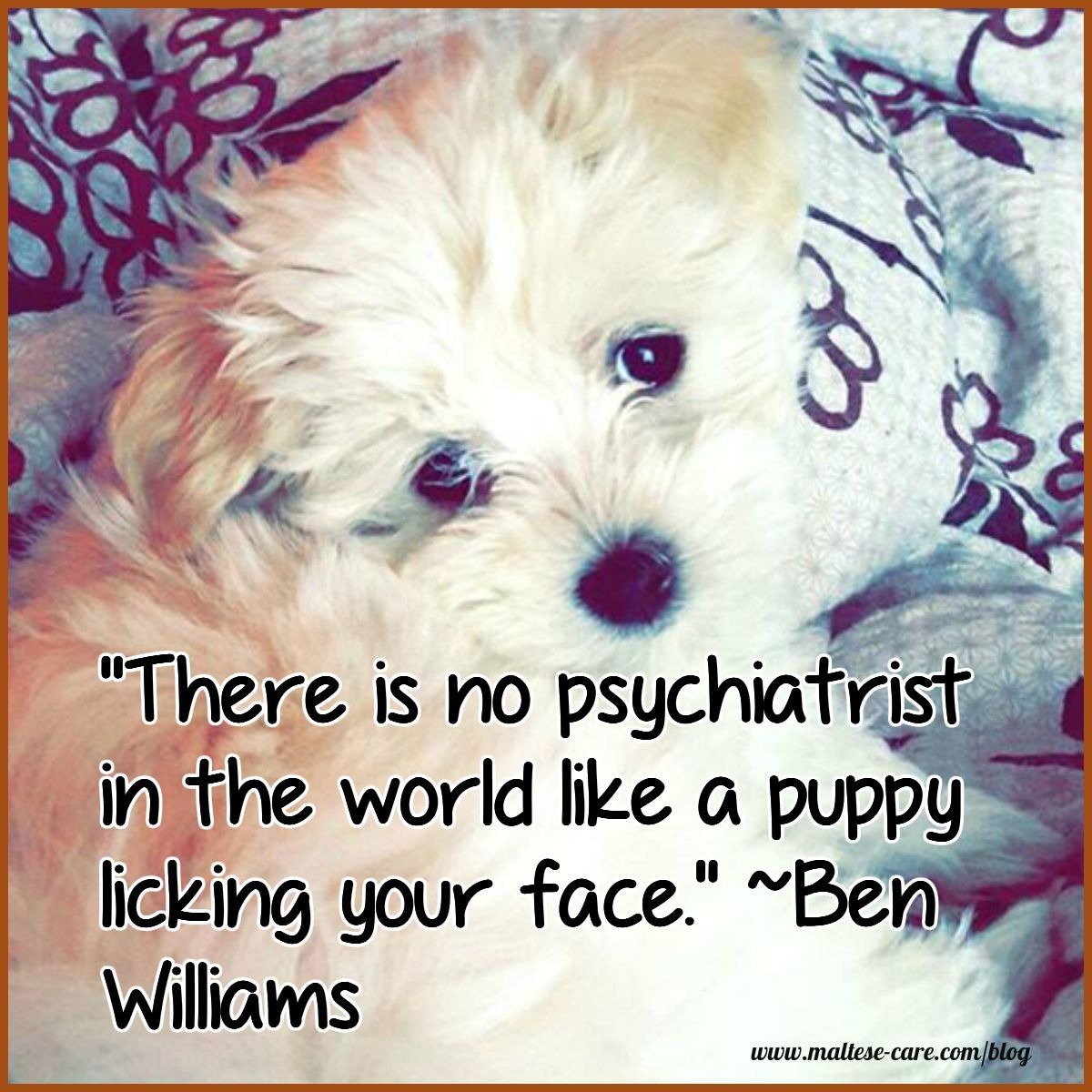 Maltese Dogs Quotes To Make You Smile Dog Quotes Dog Quotes