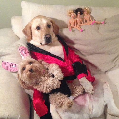 Best Dog Costume Ever Hugh Hefner And His Main Bunny