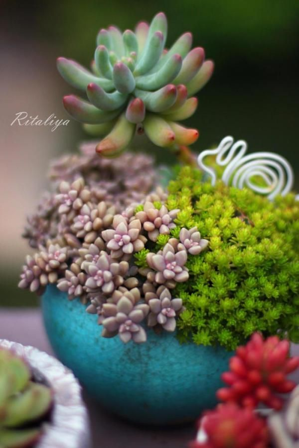 20 idées de composition florale avec des succulentes, plantes grasses et cactus en 2020 ...