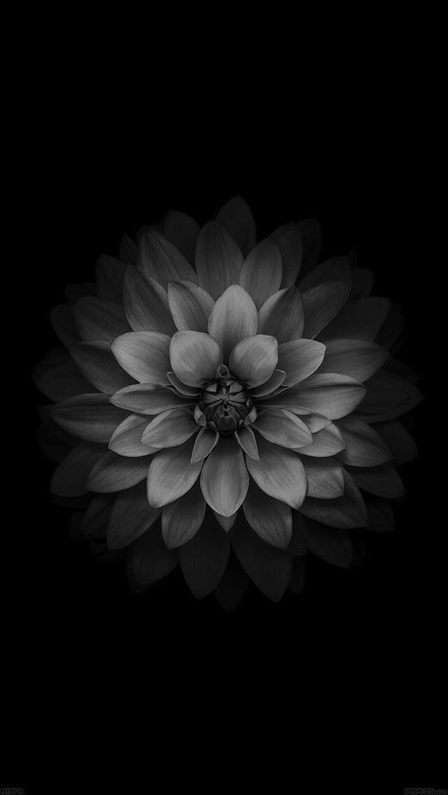 Thanks For Following Me 100 Grey Flower Wallpaper Monochrome Flower Iphone Wallpaper Blue Flower Wallpaper Blue Wallpaper Iphone