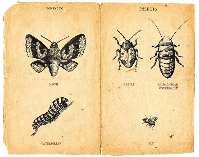 insectos ilustraciones botanicas - Google Search