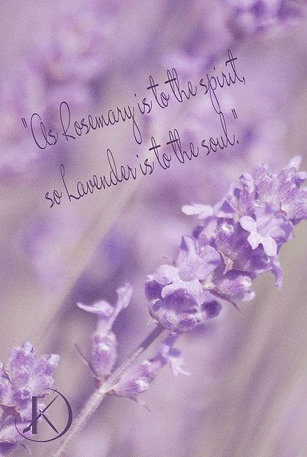 Lavender Lavender Quotes Flower Quotes Artificial Flowers Decor