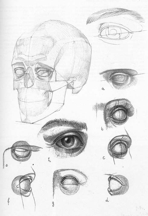 best 25  eye structure ideas on pinterest