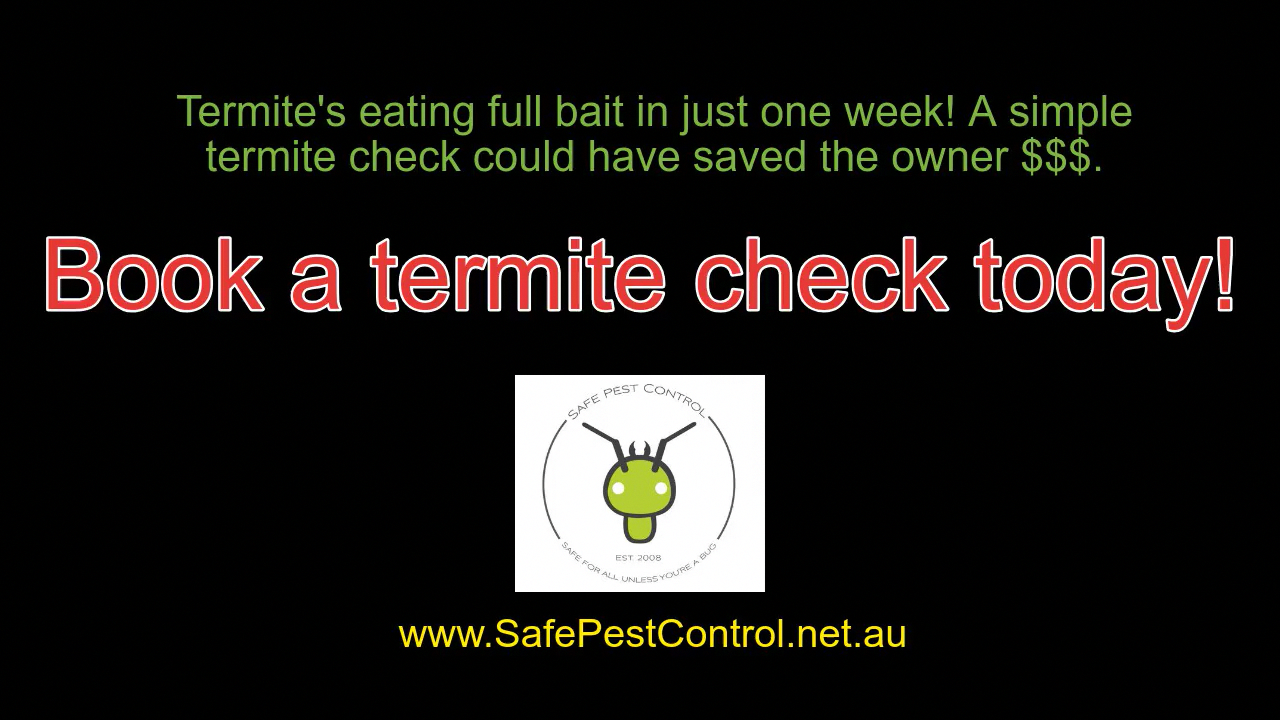 The Basics Of Pest Control Safe Pest Control Pest Control Flea Prevention