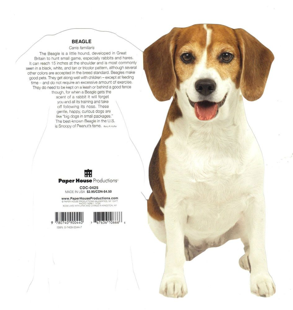 Beagle Thank You Cards | www.topsimages.com