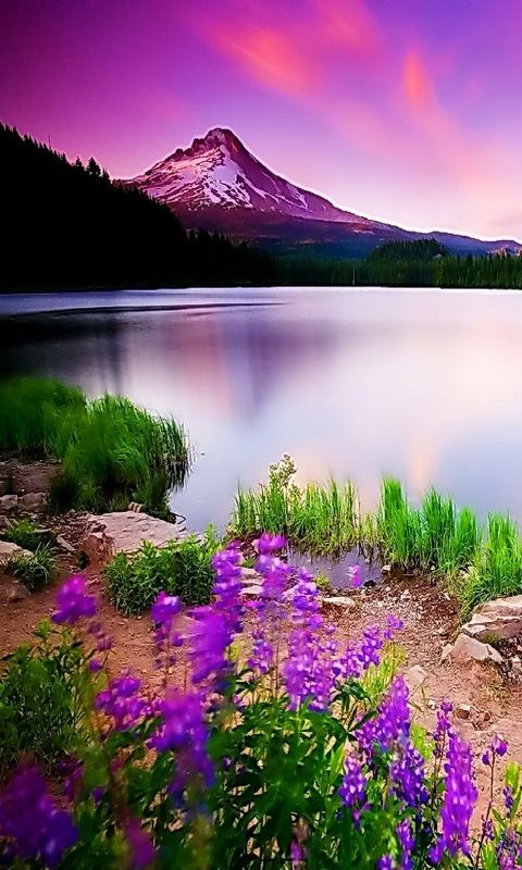 Pin By Step Into Enchanted Gardens W On Photography Excellence Beautiful Landscapes Beautiful Nature Nature Photography