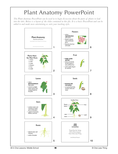 6-09 Plant Anatomy, Lesson Plan Download | fun | Pinterest | Plants ...