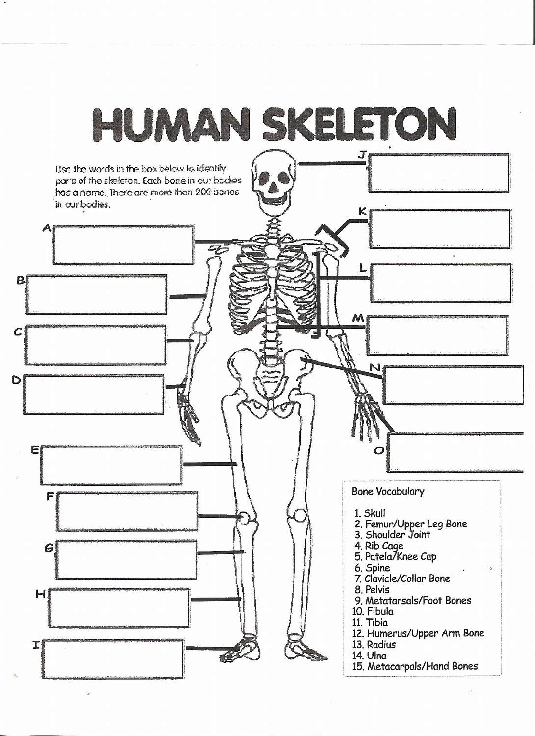 Image Result For Anatomy Labeling Worksheets