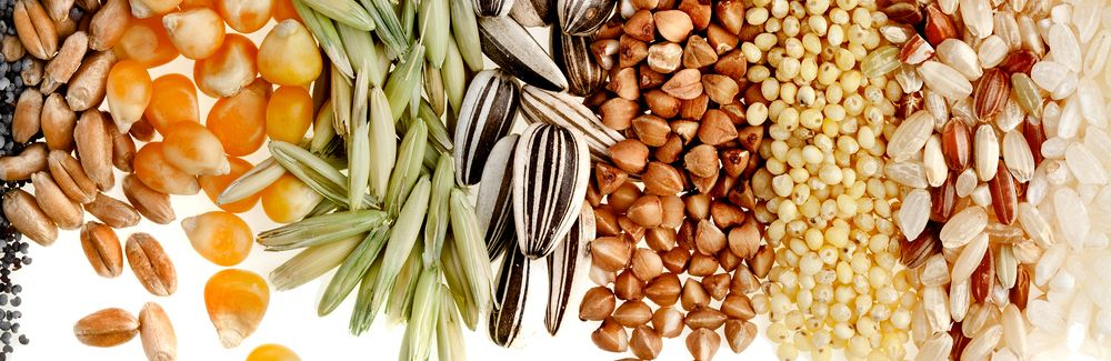 The Art of Seed Saving - Pioneer Settler | Homesteading | Self Reliance | Recipes