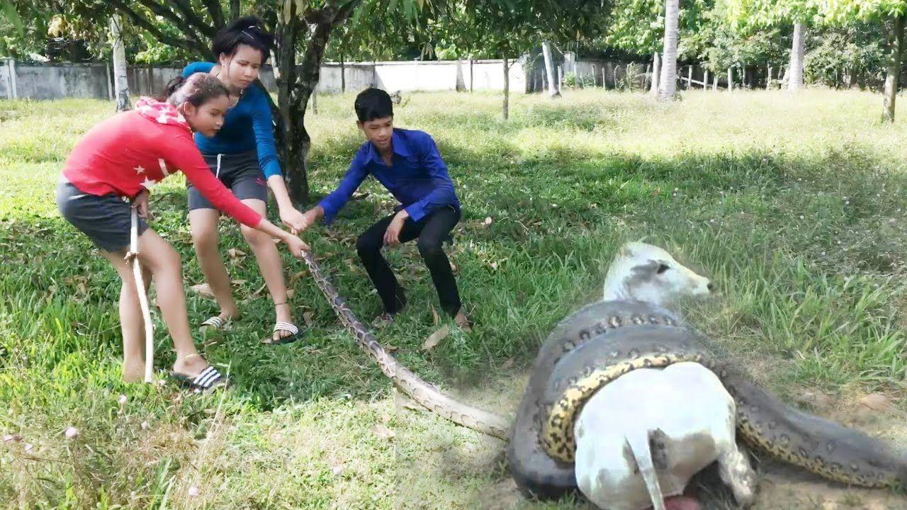 Wow!! Brave Girls Catch Big Python Snake By Hand in