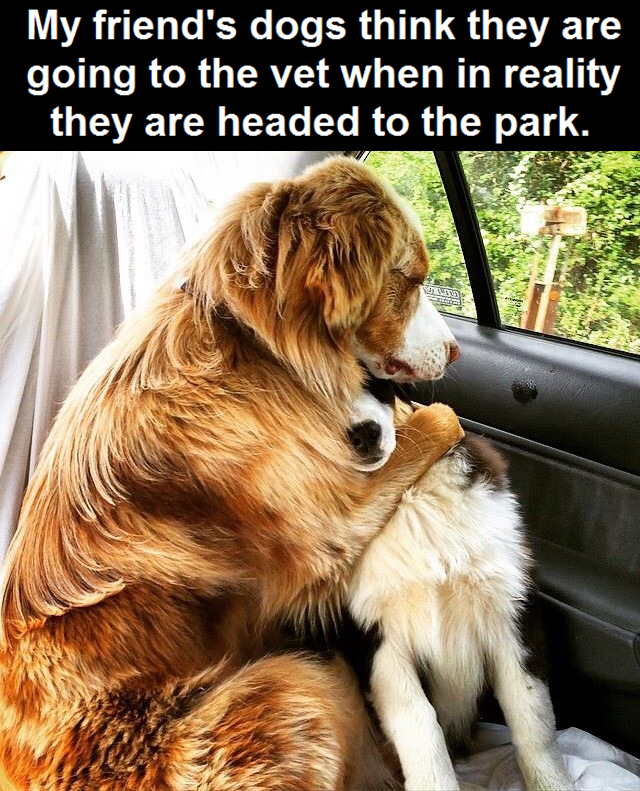 Must see Funny Canine Adorable Dog - d677073099a904a1133d1a64e676baa3  Pic_119729  .png