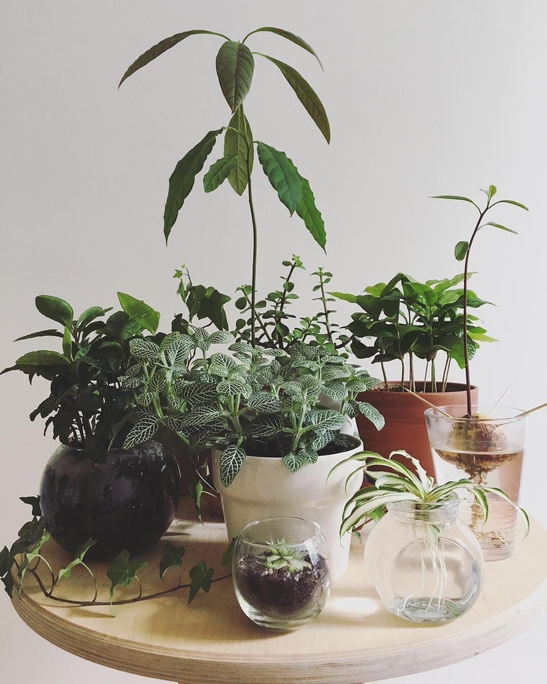 "236 curtidas, 8 comentários - Guillaume (@guscharron) no Instagram: ""Damn I love plants #houseplants #indoorplants #plants #plantslover #plantsofinstagram…"""