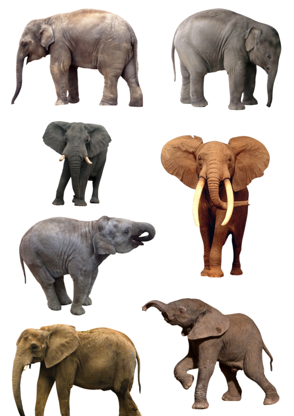 Elephant Png Elephant Animals Animals Beautiful Here you can explore hq elephant transparent illustrations, icons and clipart with filter setting like size, type, color etc. elephant png elephant animals