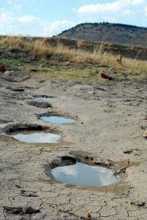 Dinosaur Footprints At Black Mesa State Park Near Kenton Ok Oklahoma Travel Dinosaur Tracks Oklahoma Tourism