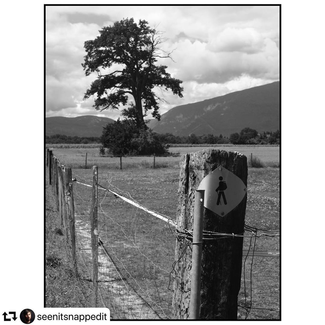 A Sunday with @seenitsnappedit ・・・ Random Randonnée : Croix-de-Rozon to Avully. . . .  Tags 🏷 #igersgeneva  #geneva  #geneve . Tags 🏷 #blackandwhite #bnw #myfeatureshoot #burnmagazine #lenscratch #apricotmagazine #somewheremagazine #noicemag #phasesmag #gupmagazine #dreamermagazine #fisheyelemag #subjectivelyobjective #broadmag #ifyouleave #phroommagazine #foammagazine
