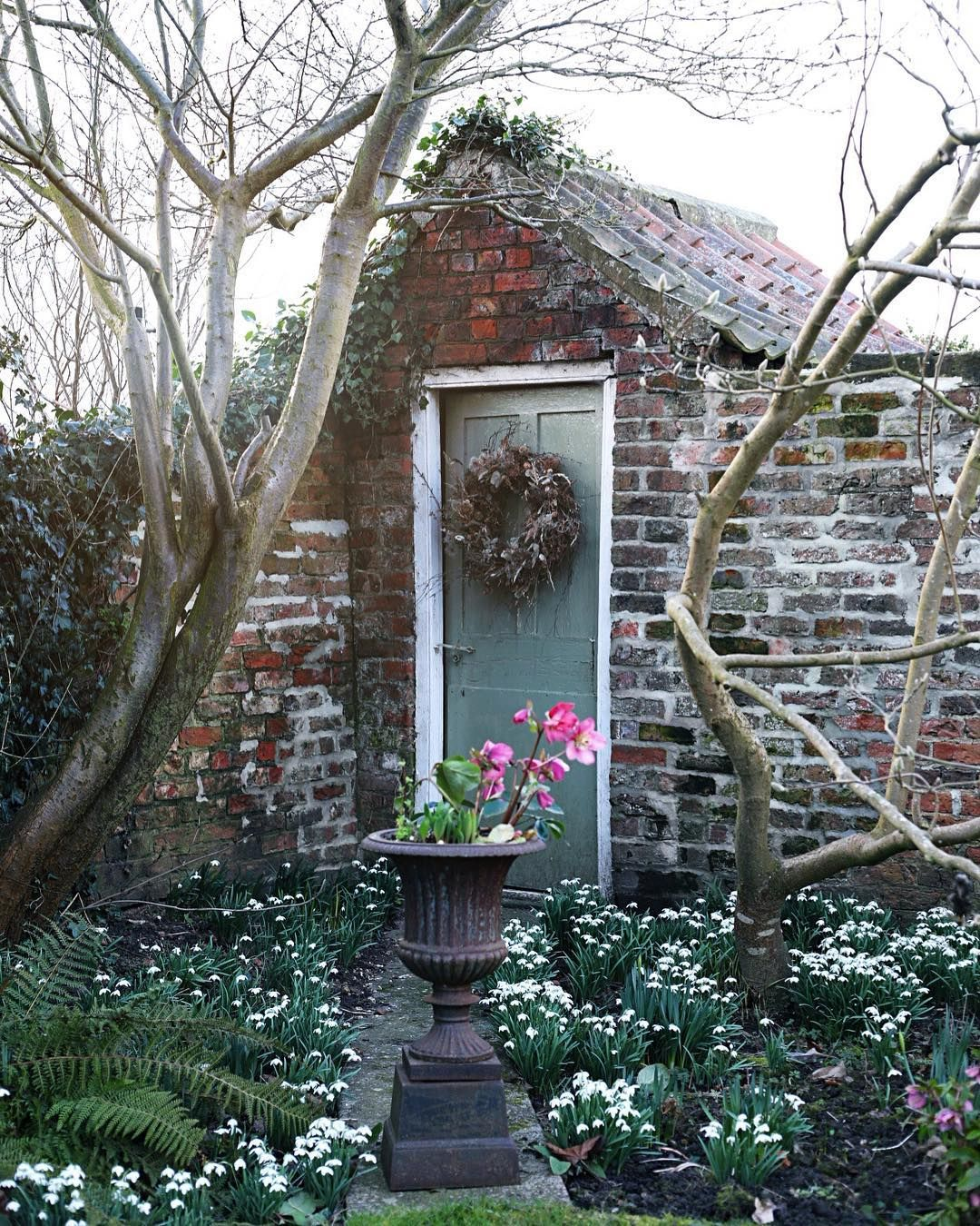 My Favourite Corner Of The Garden In February With A Carpet Of
