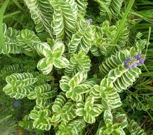 Poolside plants that look like paradise swimming pools for Plants for pool area