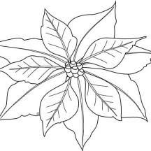 Image Result For Simple Poinsettia Drawing Christmas Tree Sketch