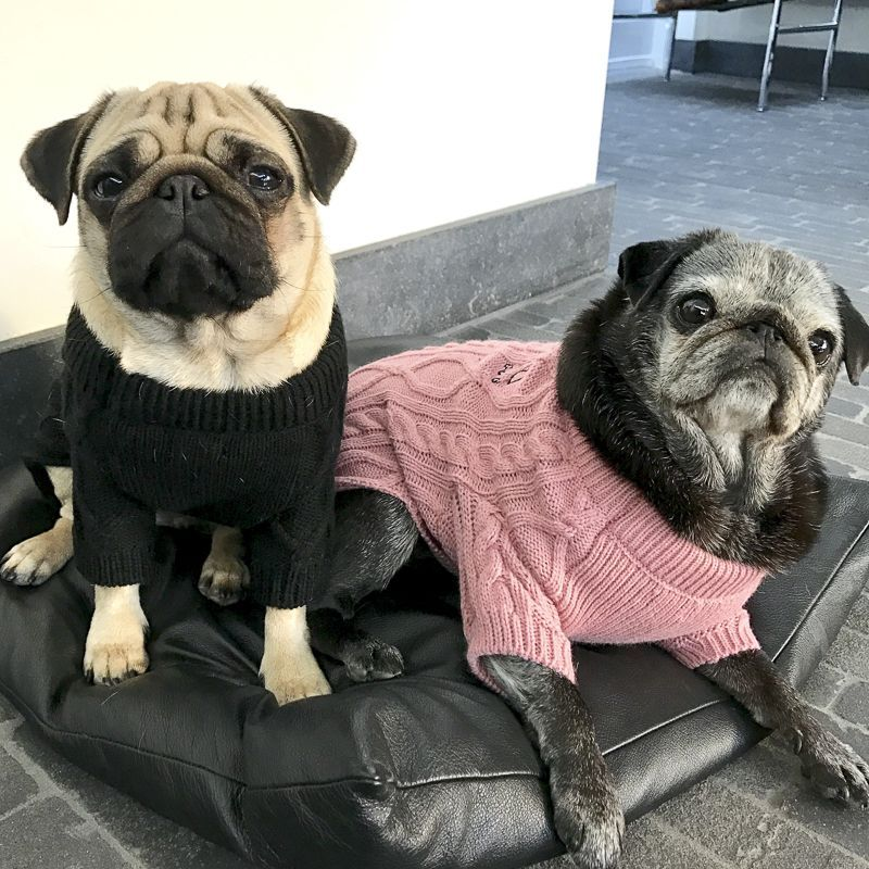 Pin By Bonnie Tracy On Funny Pugs Black Pug Puppies Baby Pug
