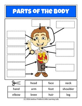 Little Learning Labs - Parts of the Body - Anatomy Worksheet ...