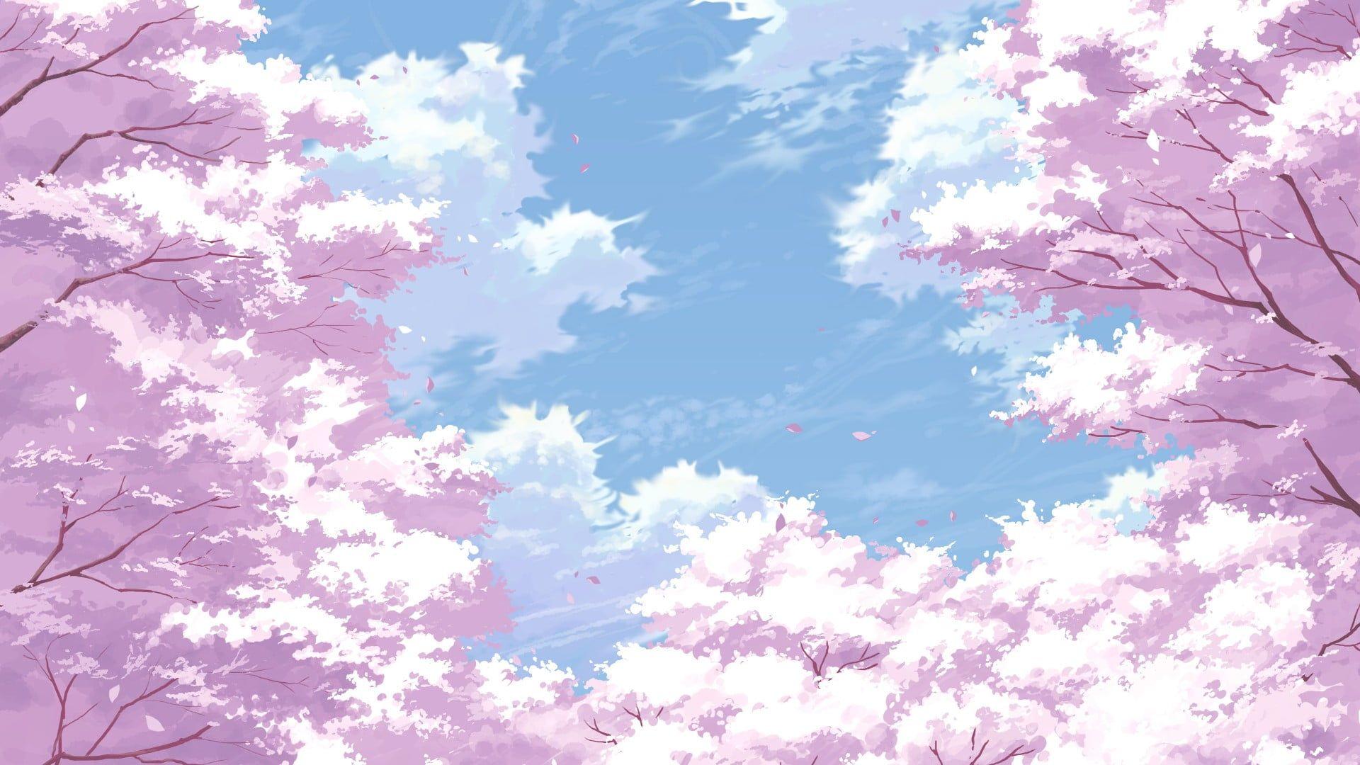 Cherry Blossom Digital Wallpaper Cherry Blossom 1080p Wallpaper Hdwallpaper Desktop In 2020 Anime Scenery Wallpaper Cherry Blossom Wallpaper Anime Cherry Blossom