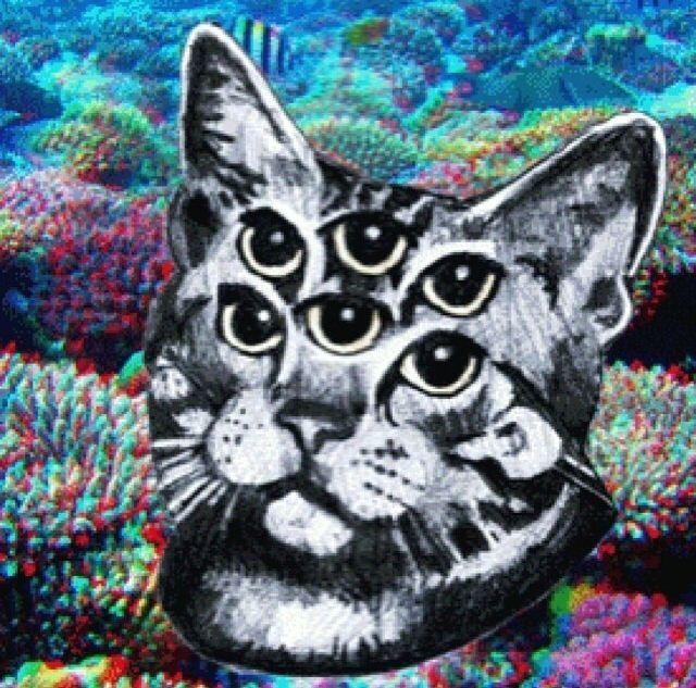 82759-Trippy-Cat.jpg (640×633)