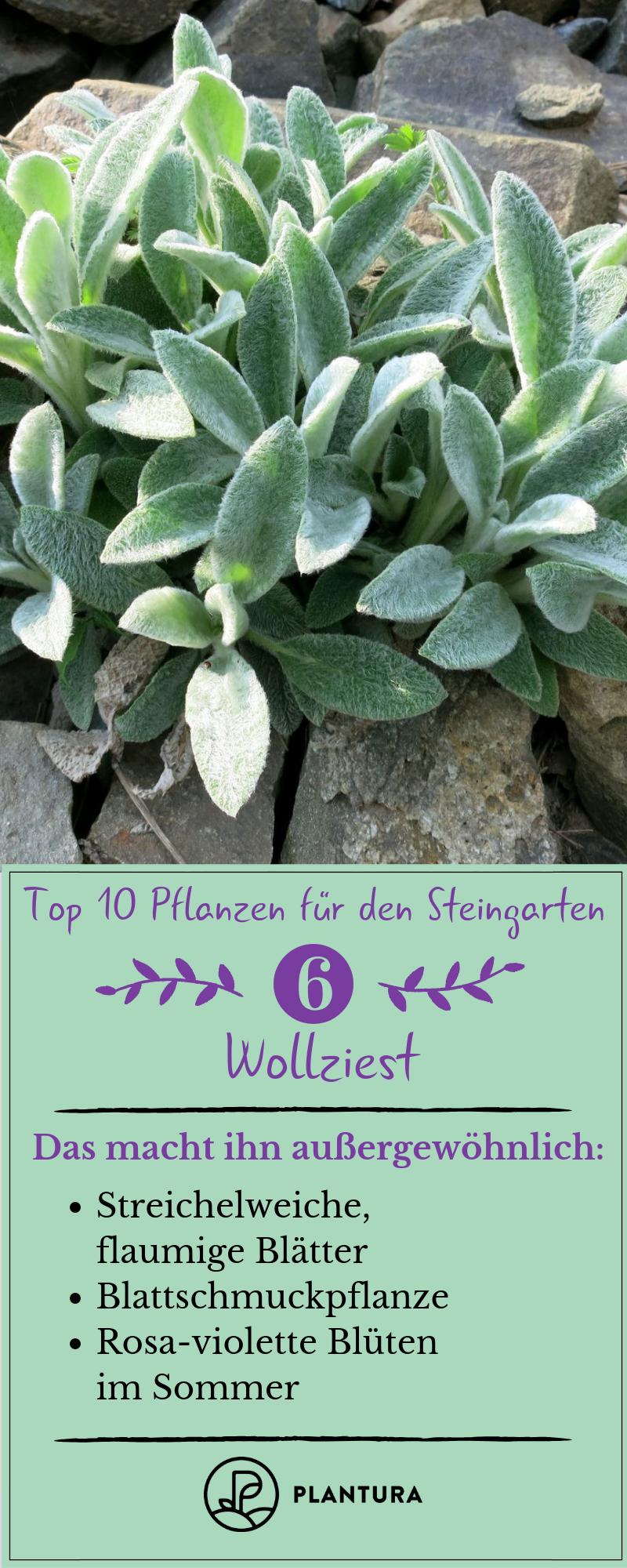 Die 10 schönsten Pflanzen für den Steingarten - Plantura