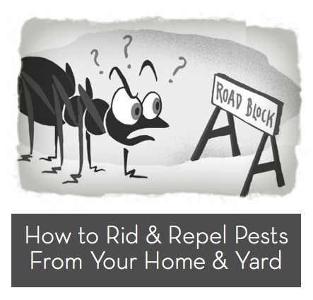 How to deal with summertime bugs and pests.