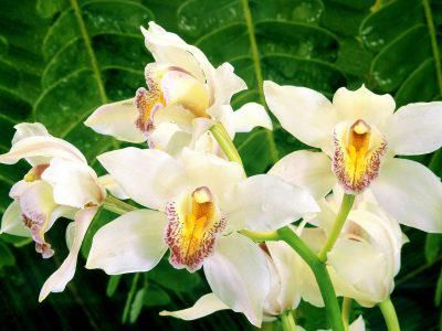 Pin by anita may on para ti mis flores for you pinterest explore white orchids orchid flowers and more mightylinksfo