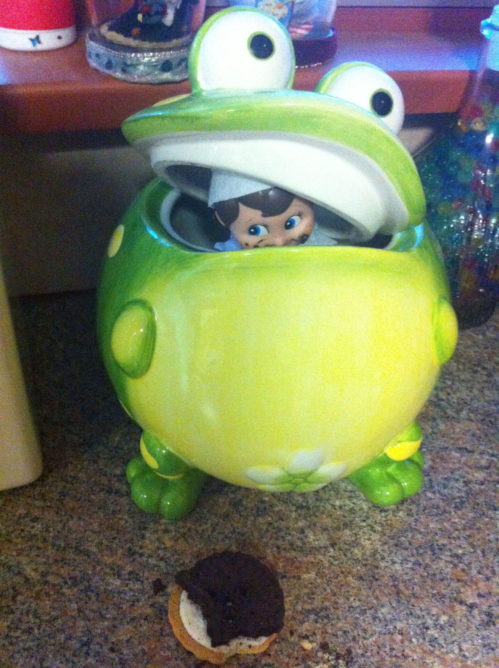 Day 5  Hiding away in the cookie jar... the beginning of his mischievous behaviour.