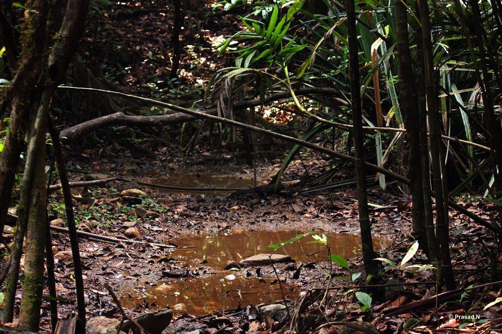 Title Water Hole Kudremukh Nature Camping Soul Searching Water