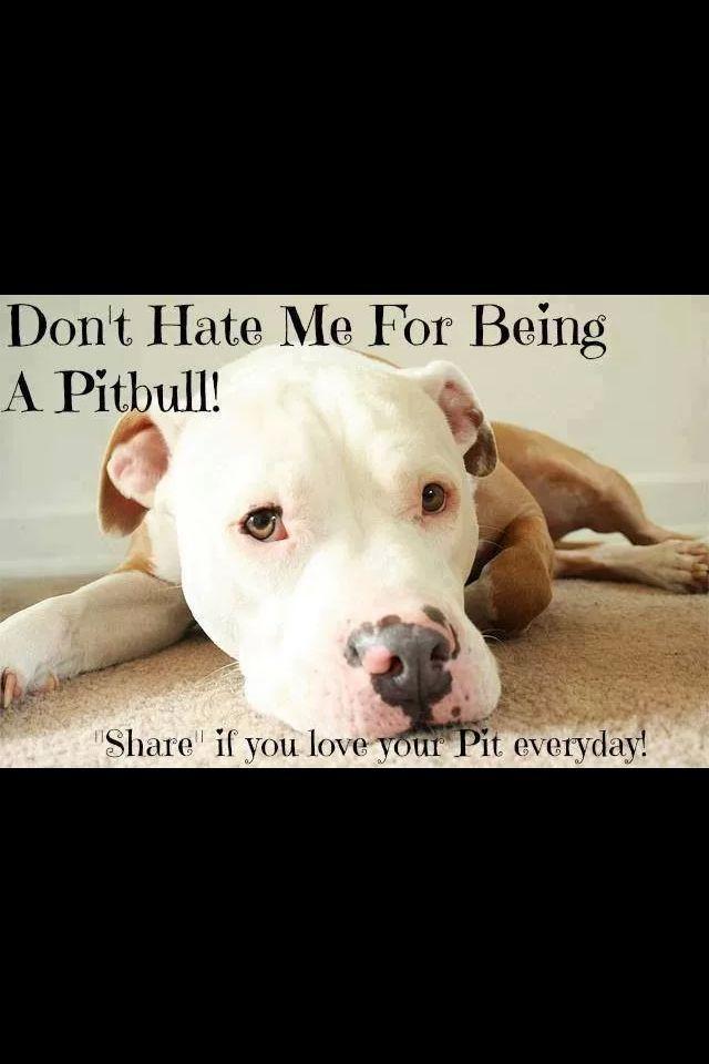 Pin By Michelle On Pitbull Pitbulls Pitbull Terrier Beautiful Dogs