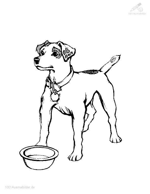 ausmalbild hund - ausmalbilder für kinder   hund - katze