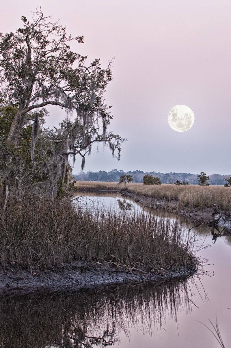 The Carolina Lowcountry. COOPER RIVER MARSH