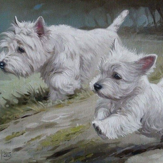 Check This Out On Instagram Com Westie Dogs Westie Terrier