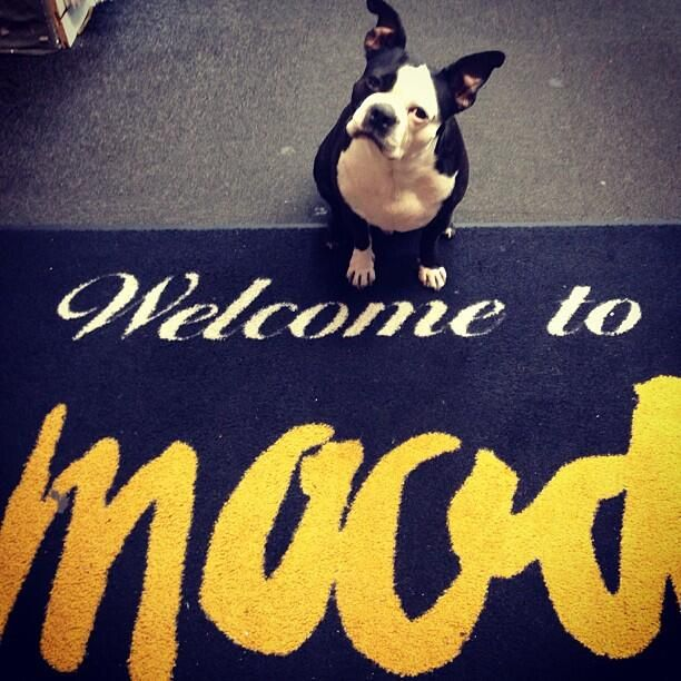 Twitter / Mood_Fabrics: Swatch fans, heres your dog ...