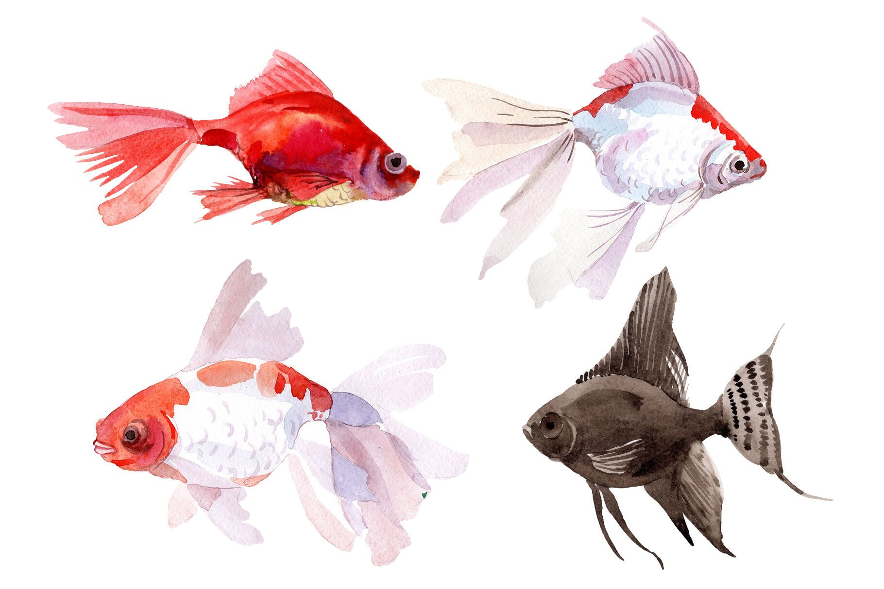 Fairytale Red Goldfish Watercolor Png By Mystocks Thehungryjpeg Com Goldfish Ad Red Fairytale Goldfish Watercolor Watercolor Graphic Graphic Design Art