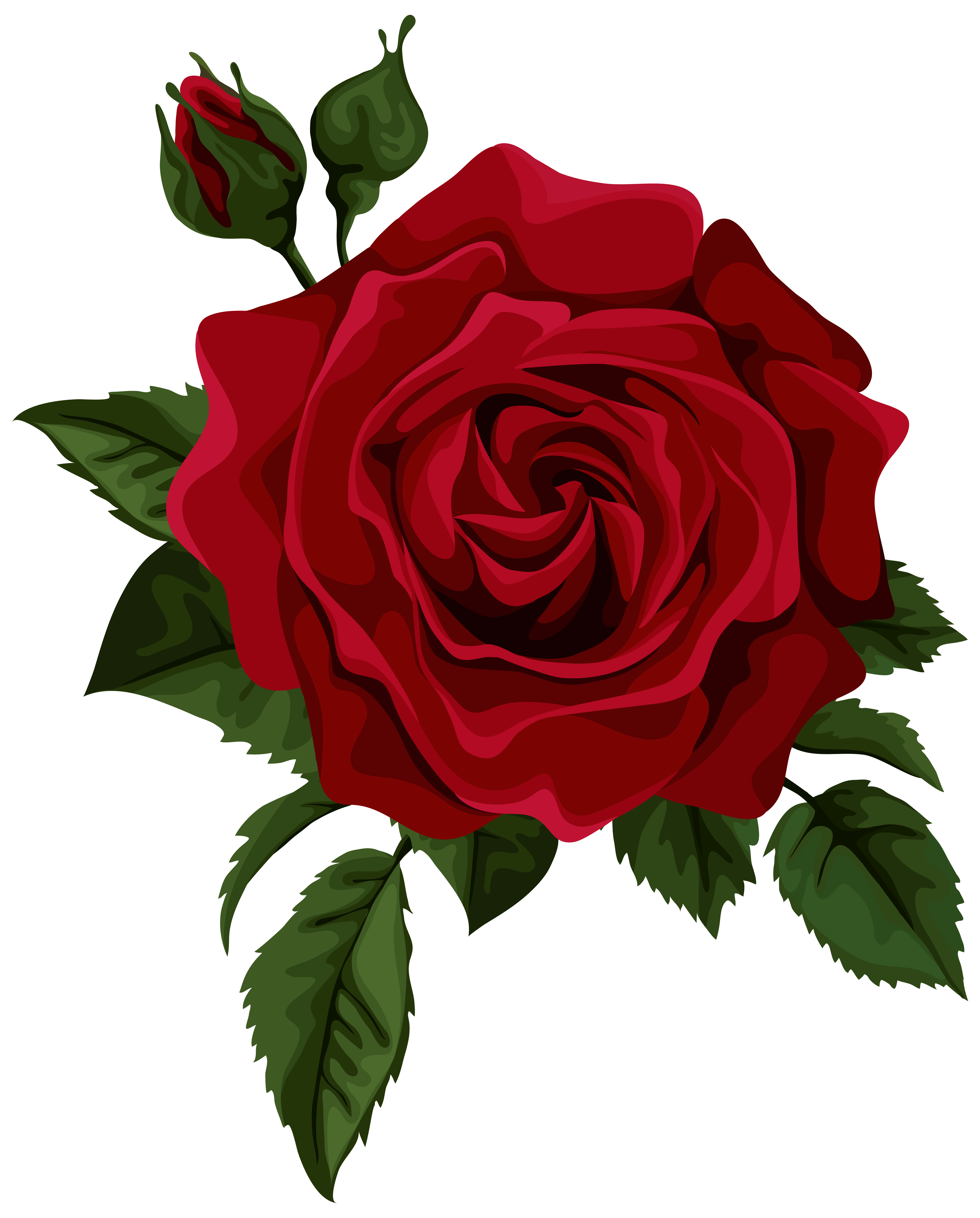 Roses Red Rose With Bud Transparent Clip Art Picture Rose Art