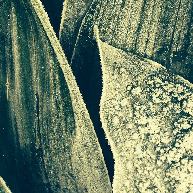 #cold #outside #winter #botany