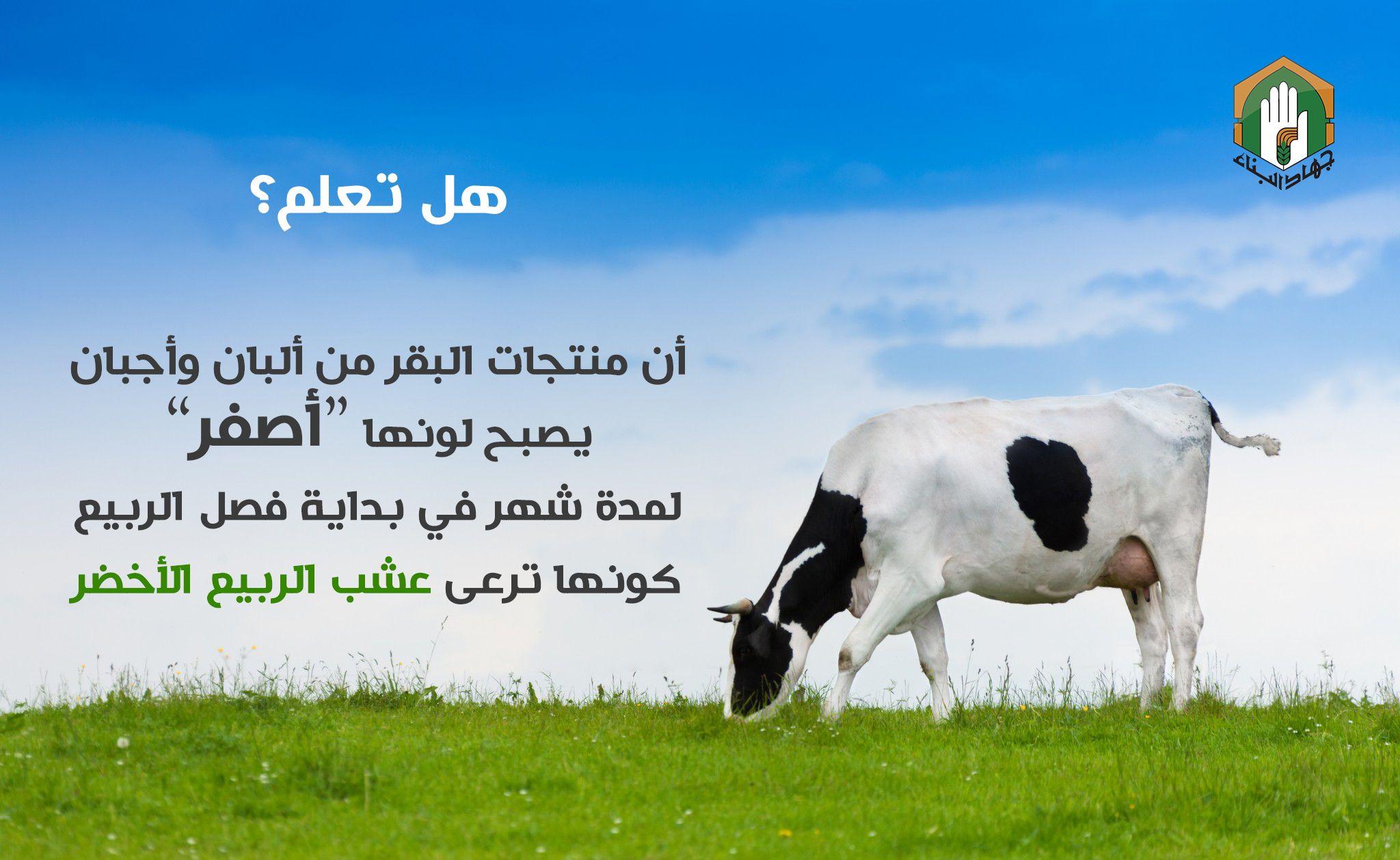 هل تعلم منوجات البقر لونها أصفر فب فصل الربيع Joni Animals Cow