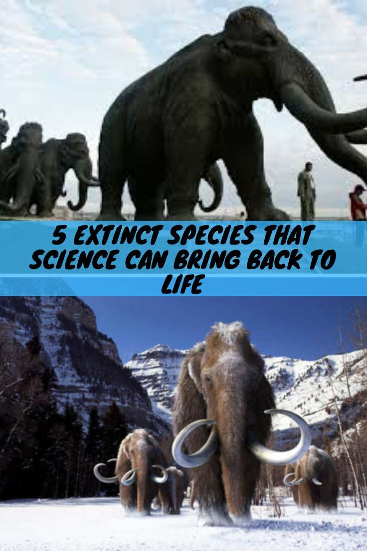 5 Extinct Species That Science Can Bring Back To Life in
